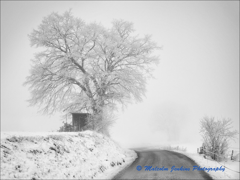 Journey in the Winter Mist