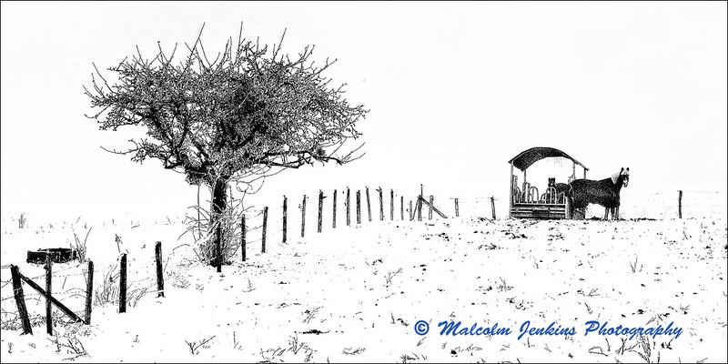 Alpine Field in Winter