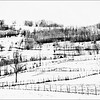 Winter Fields