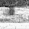 Fence Leading to Gate in the Snow