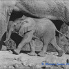 Madikwe Revisited - A Youngster with Mum