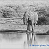 Madikwe Revisited - Elephant at the Water Hole