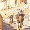 Elephans in Jaipur