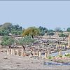 Un Quais: Roman Remains