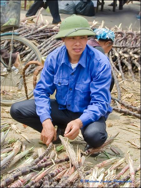 Inspecting Sugar Cane