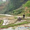 Preparing a Rice Terrace