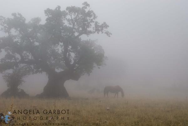 ©Angela B. Garbot