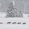 Braving the Snow Storm