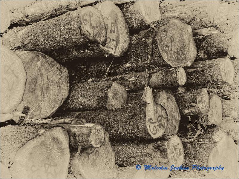 Logging 14