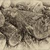 Logging 15