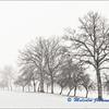 Trees in Winter Mist