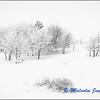 Snowy Hillside (2) / Paysage Enneigé (2)