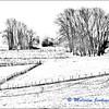 Winter Field / Champs en Hiver