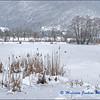 Frozen Reed Bed / Lac du Môle en Hiver
