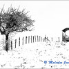 Alpine Field in Winter / Champs Alpine en Hiver