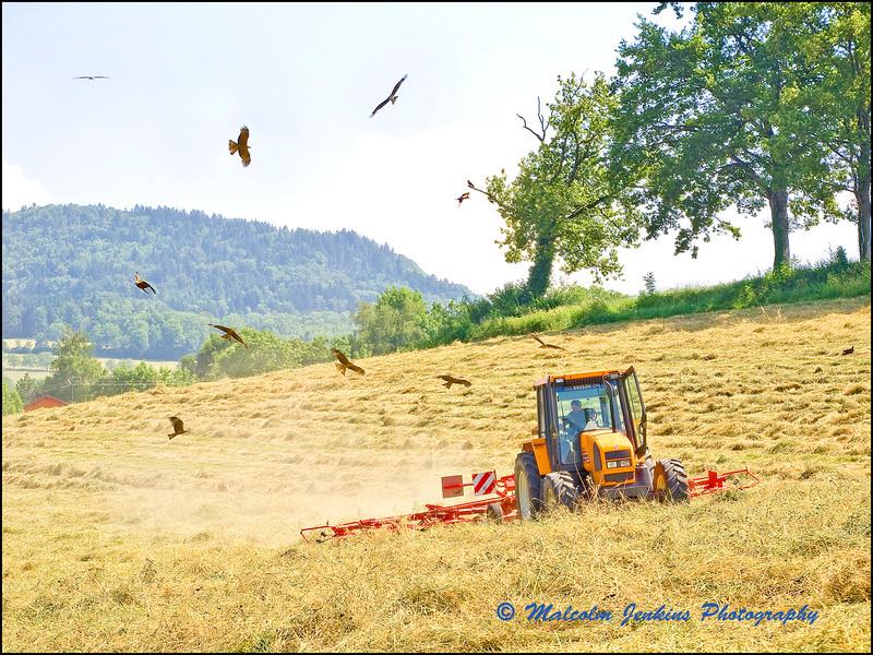 The Killing Field / Le Champ de Mort
