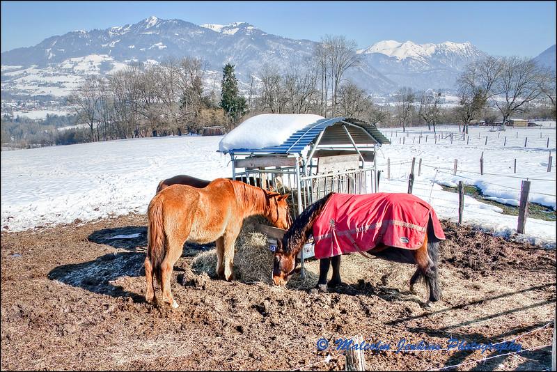 Horses at the Hay