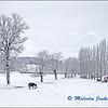Horses in the Snow (1) / Les Chevaux dans la Neige (1)
