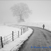 Walk in the Winter Mist