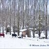 Horses in the Snow (2) / Les Chevaux dans le Neige (2)