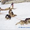 Huskies Resting