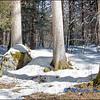 Trees & Snow / Arbres et Neige