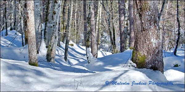 Trees, Snow & Shadow
