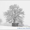 Freshly Falling Snow / Première Neige