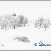 Snowy Hillside (1) / Paysage Enneigé (1)