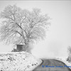 Journey in to the Winter Mist / Voyage dans le Brouillard Hivernal