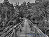 Old Tressel Bridge at Noojee (Middle)