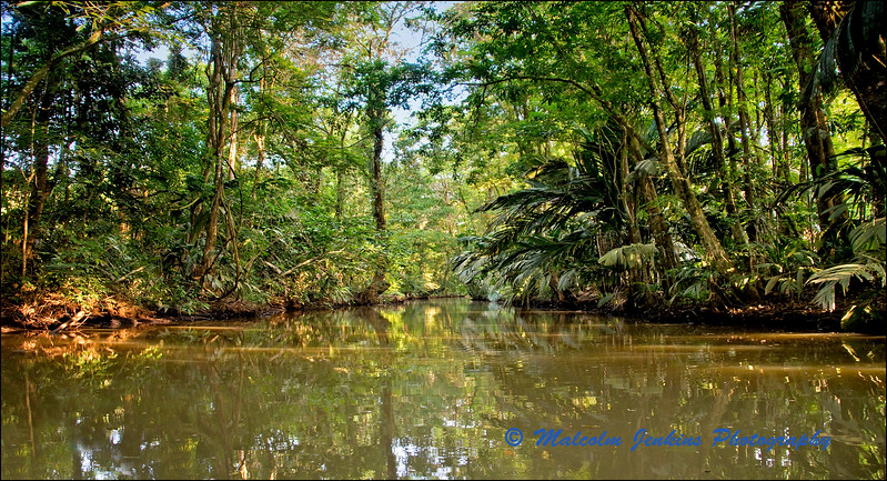 Waterway in the Tropical Jungle
