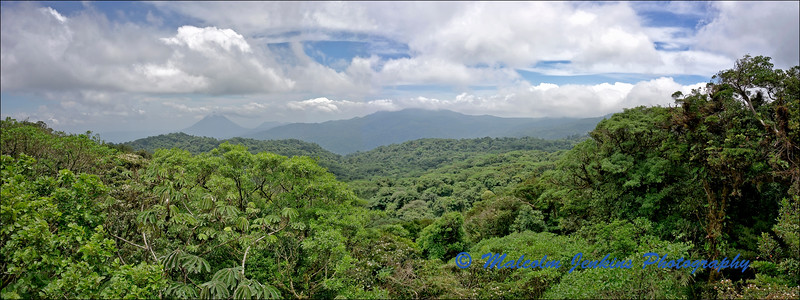 Cloud Forest View of The Canopy with The Arenal Volcano in the Distance