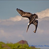 Pelican Fishing: Absolutely! (2 of 5)