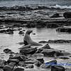 Sea Lion Basking in a Coastal Pool