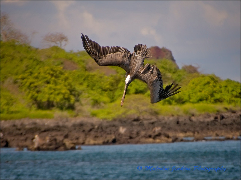 Pelican Fishing: Now I'm Fully Committed (3 of 5)