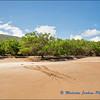 Turtle Tracks on Espumilla Beach