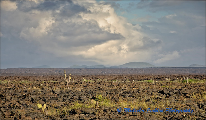 Lava Field at Punta Moreno