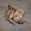 Young Sea Lions Chilling Out