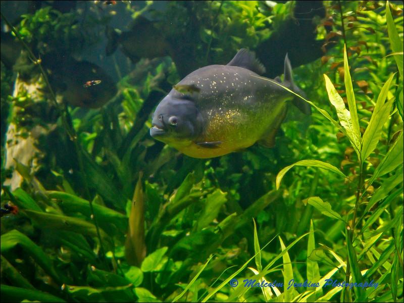 London Aquarium.