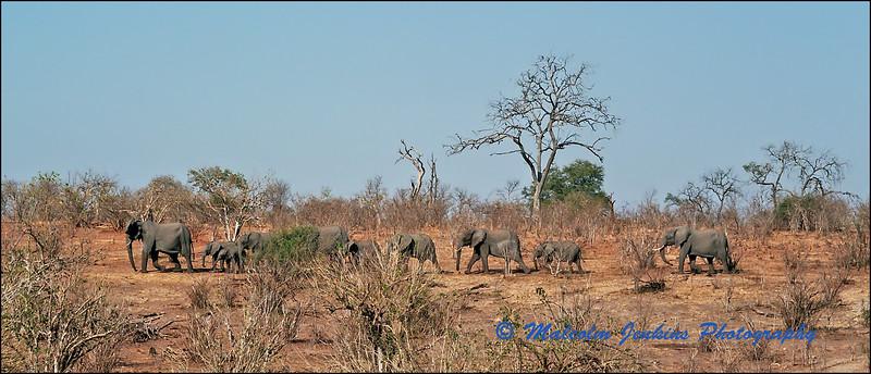 Troupe of Elephants