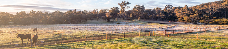 Frosty Morning
