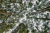 Australia's Trees