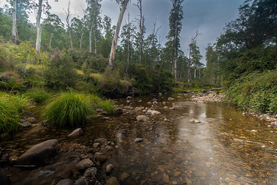 Creek in the High Country