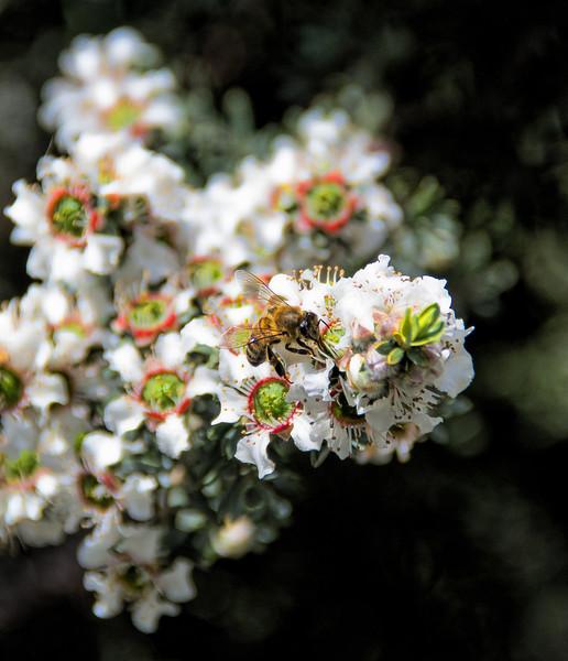 Bee hunting nectar