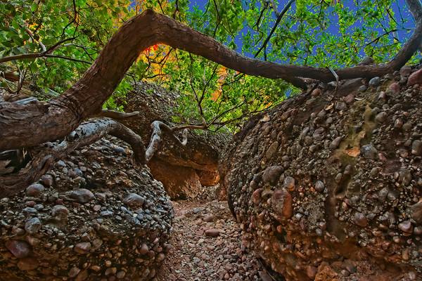 The Mini Palms Gorge Trail