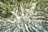 The beautiful trees of the Otway forest