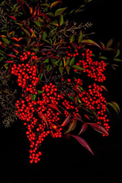 Beautiful Berries