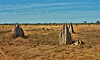 Nifold Plain Termite Mounds