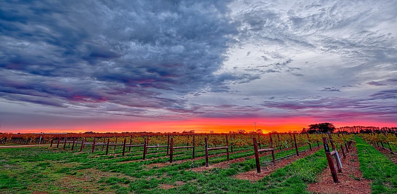 Sunrise over the Vineyard